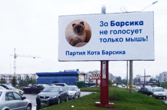 За кота барсика не голосует только мышь