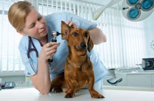 сколько зарабатывает ветеринар